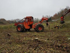 silvertand bosbouw