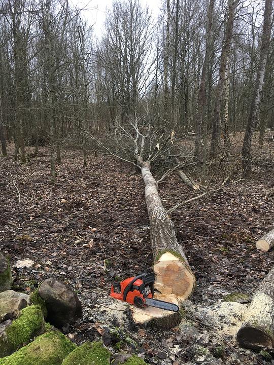 bosbouw werk kettingzaag